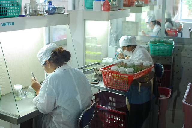Lab Techs at Hainan nursery